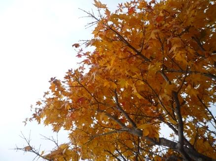 士幌高原ヌプカの里の紅葉