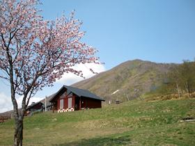 士幌高原ヌプカの里の桜1